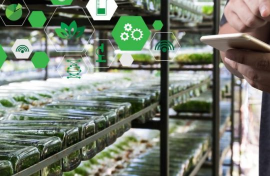 The UK senses a smart farming revolution